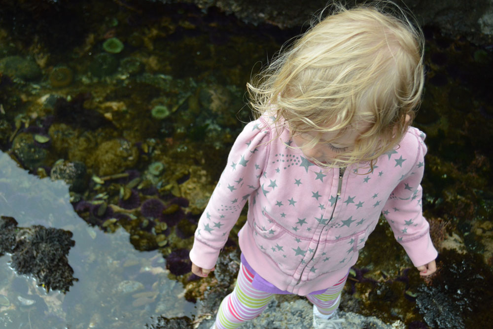 Oregon family vacation - exploring tide pools with kids - Mommy Scene