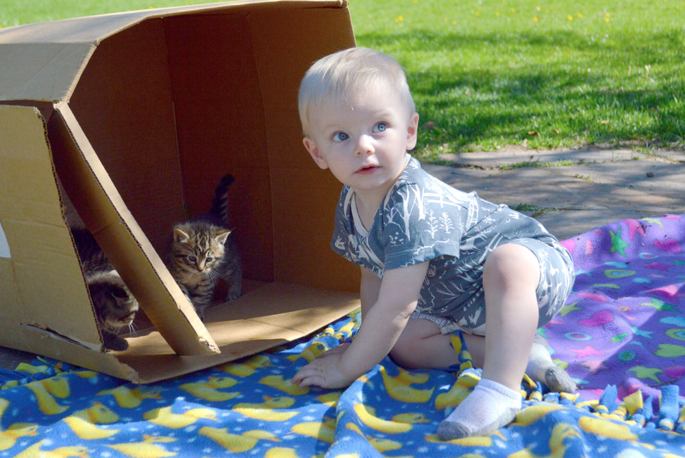 Cute Wild Dill clothing and baby with kittens - Mommy Scene