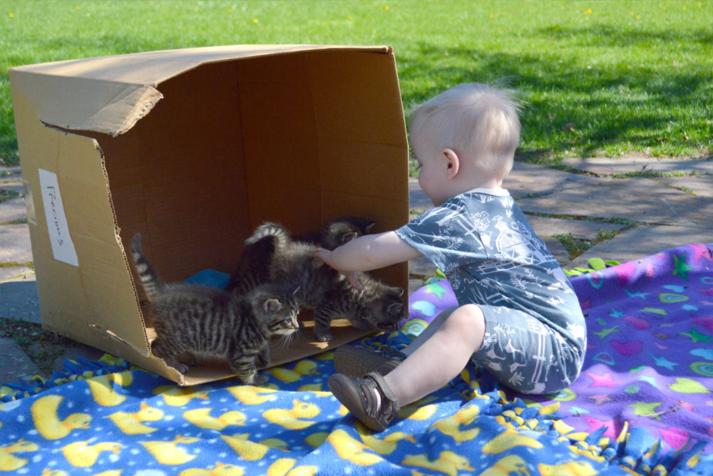 Wild Dill baby boy fashion and kittens - Mommy Scene