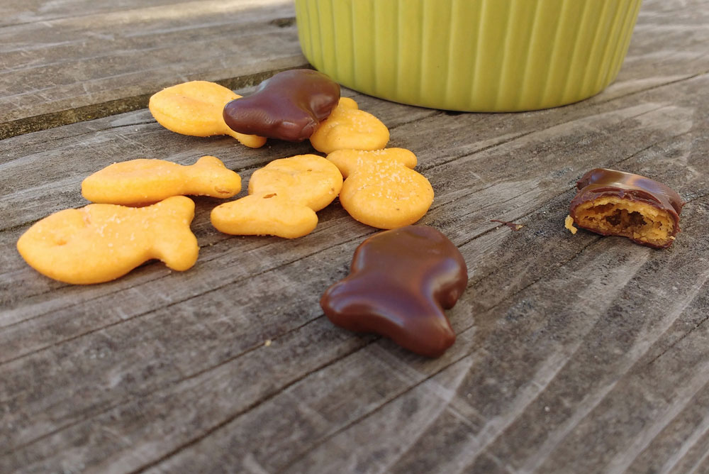 Easy Homemade Chocolate covered goldfish - Mommy Scene