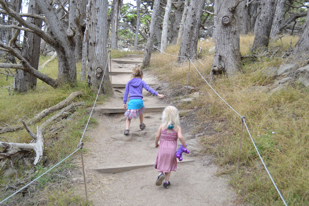 Point Lobos family hike in Carmel California - Mommy Scene