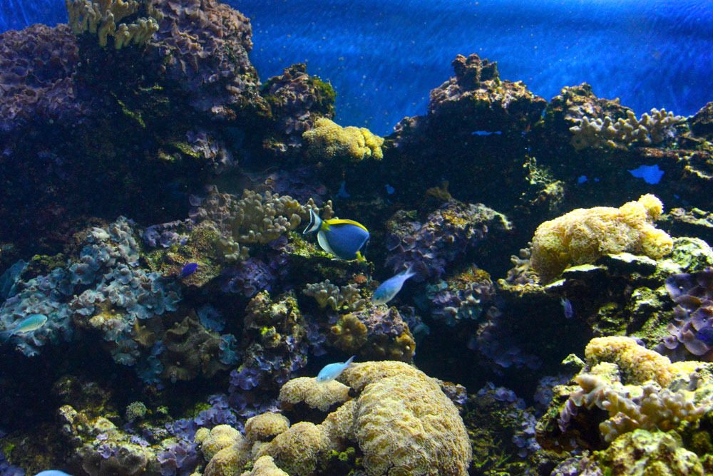 Under the Sea displays at the Vancouver Aquarium - Mommy Scene