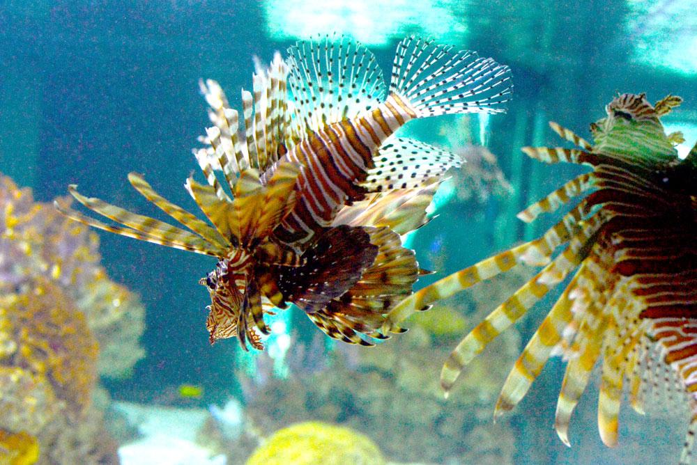 Vancouver Aquarium ocean viewing windows - Mommy Scene
