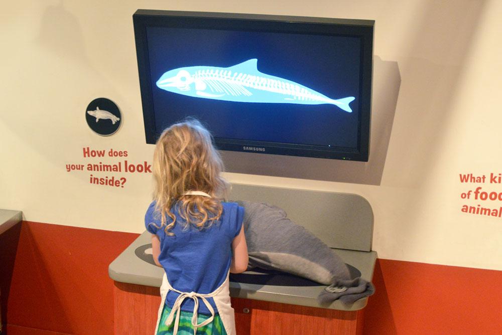 Vancouver Aquarium kids animal rescue center - Mommy Scene
