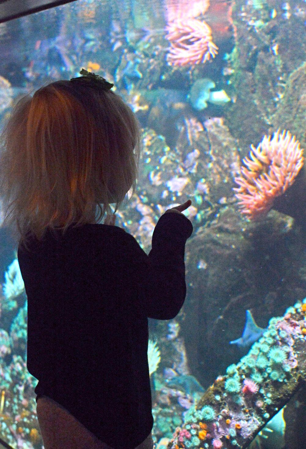 Vancouver Aquarium star fish and sea anemones - Mommy Scene
