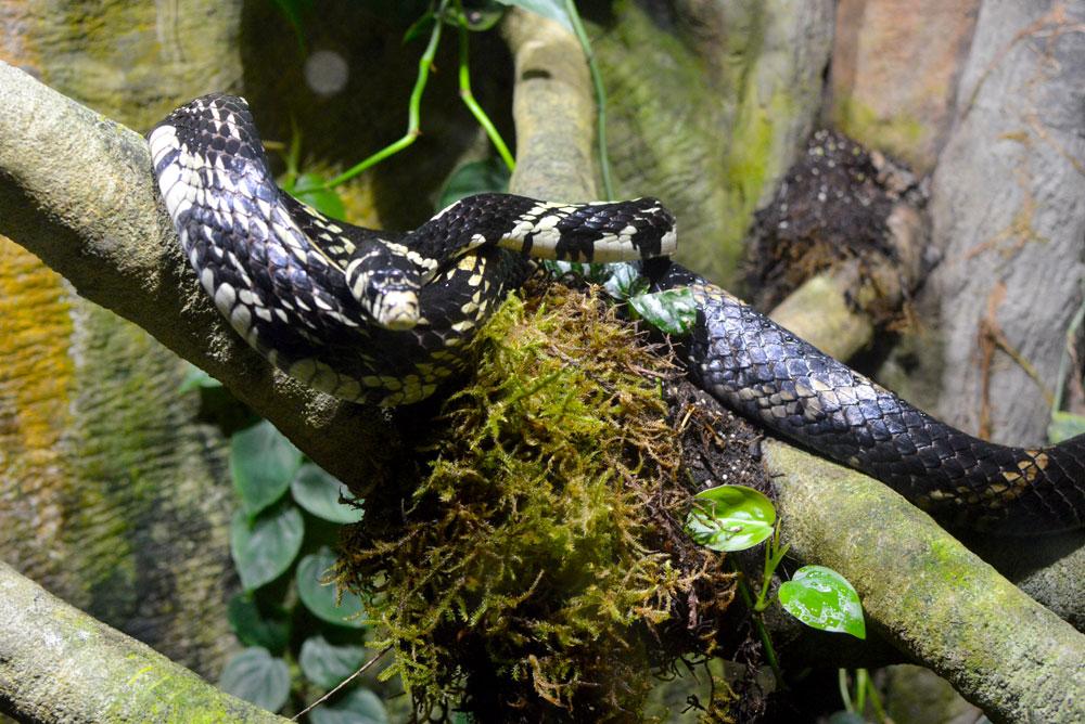 Vancouver Aquarium reptiles exhibit - Mommy Scene