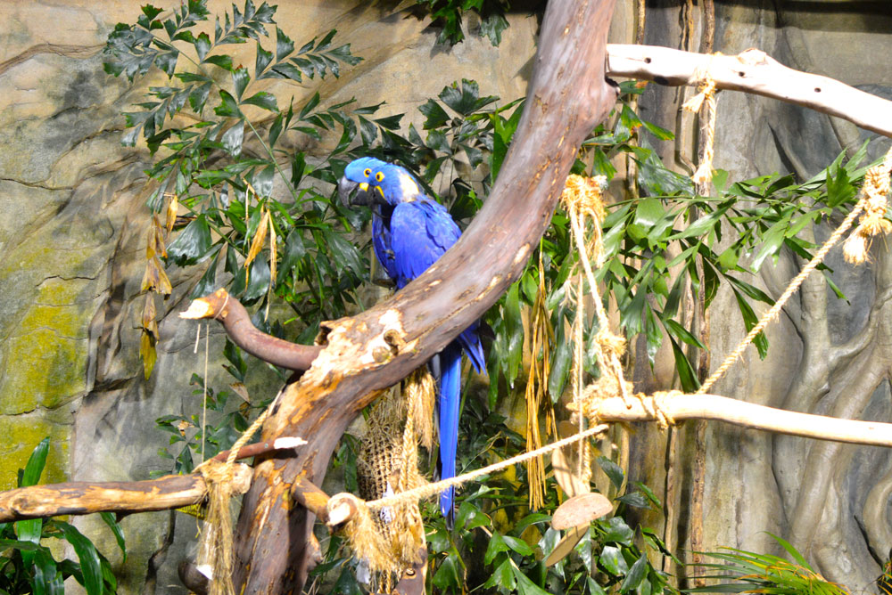 Tropical birds at the Vancouver Aquarium - Mommy Scene