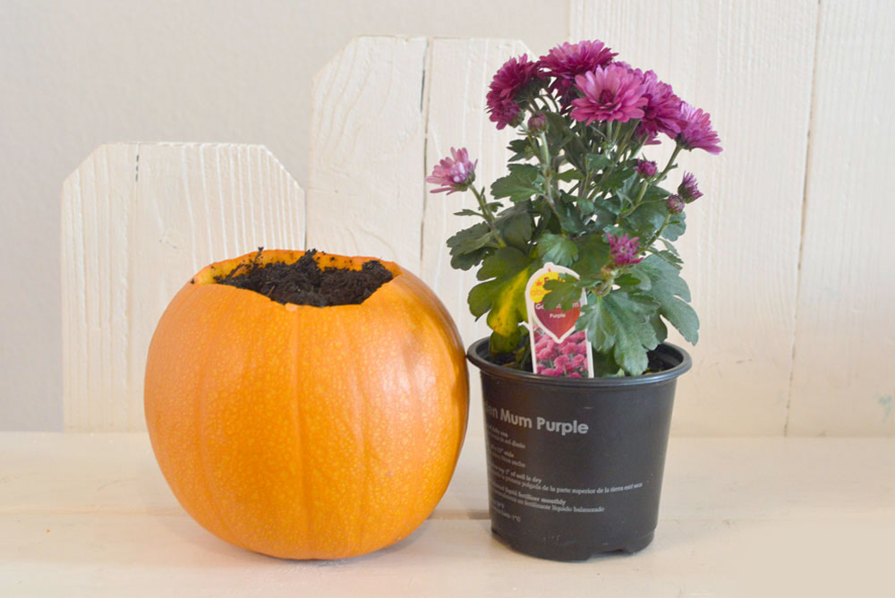 Easy DIY pumpkin flower planter - Mommy Scene