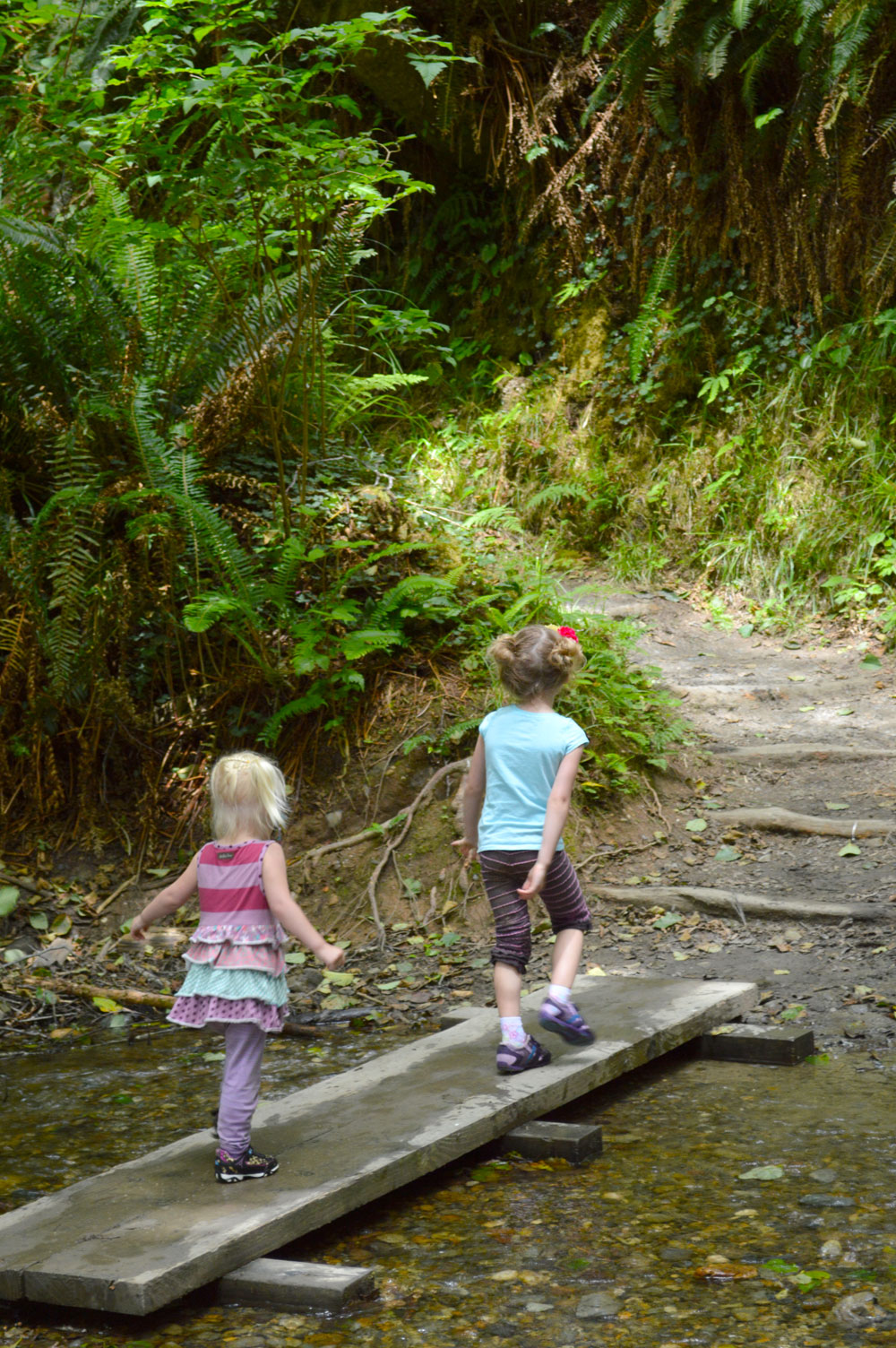 California fern canyon family hike - Mommy Scene
