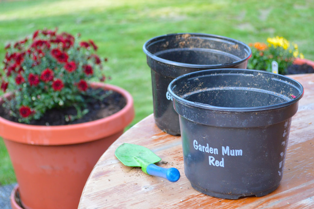 Flowers to plant in the fall - Mommy Scene
