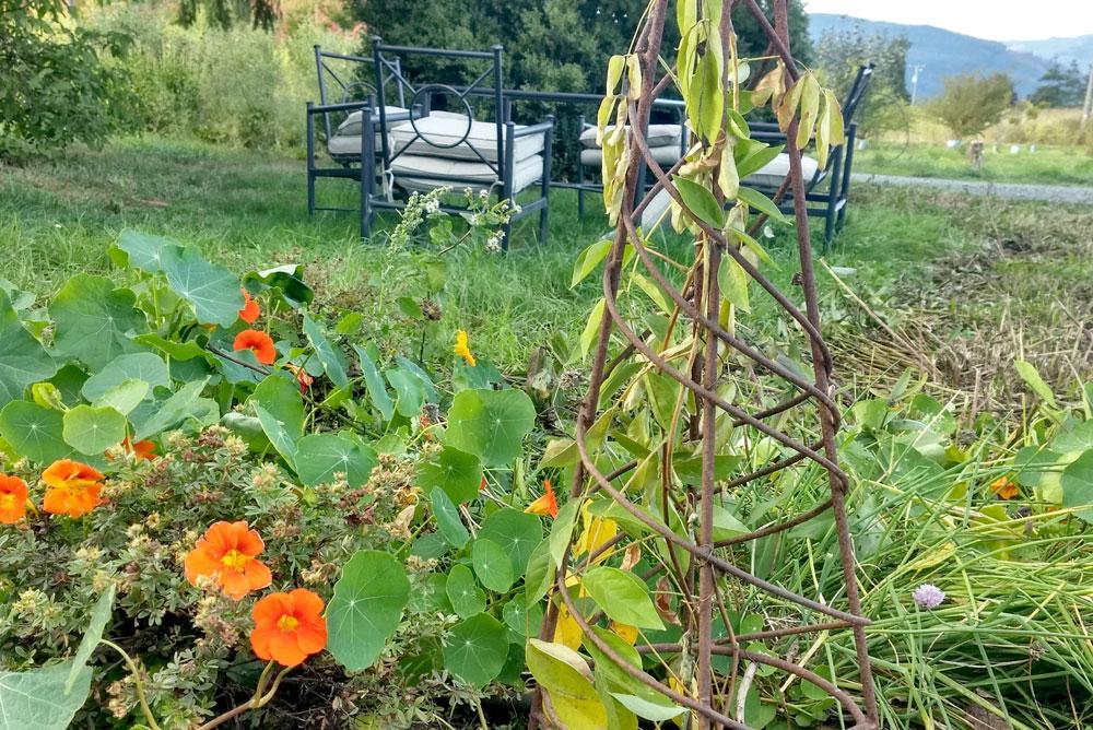 Moon Valley Organics farm garden tour - Mommy Scene