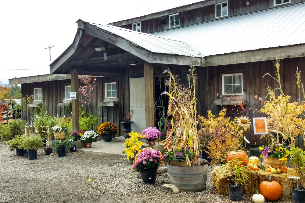Gorgeous Fall Blooms at New Leaf Nursery Fall Festival Coeur d'Alene - Mommy Scene