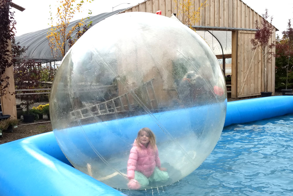 Zorbing at New Leaf Nursery Fall Festival Coeur d'Alene - Mommy Scene