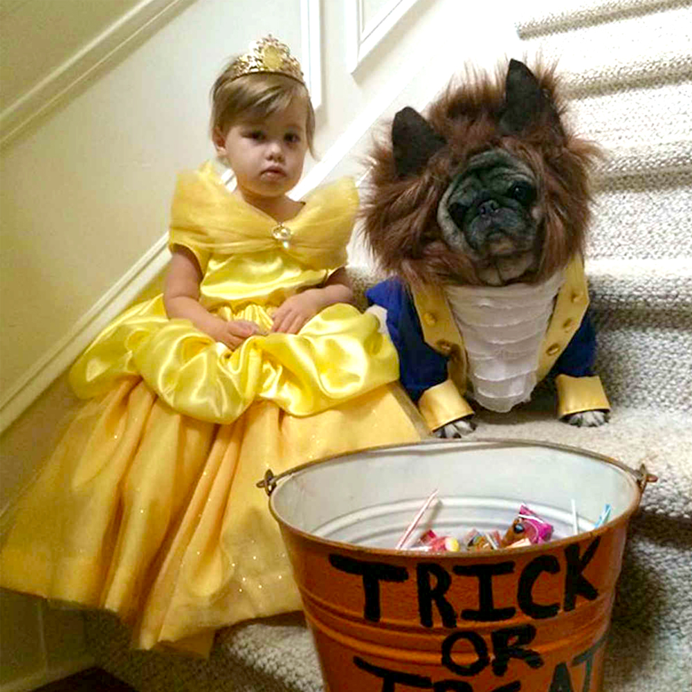 Beauty and the beast toddler belle costume and dog outfit