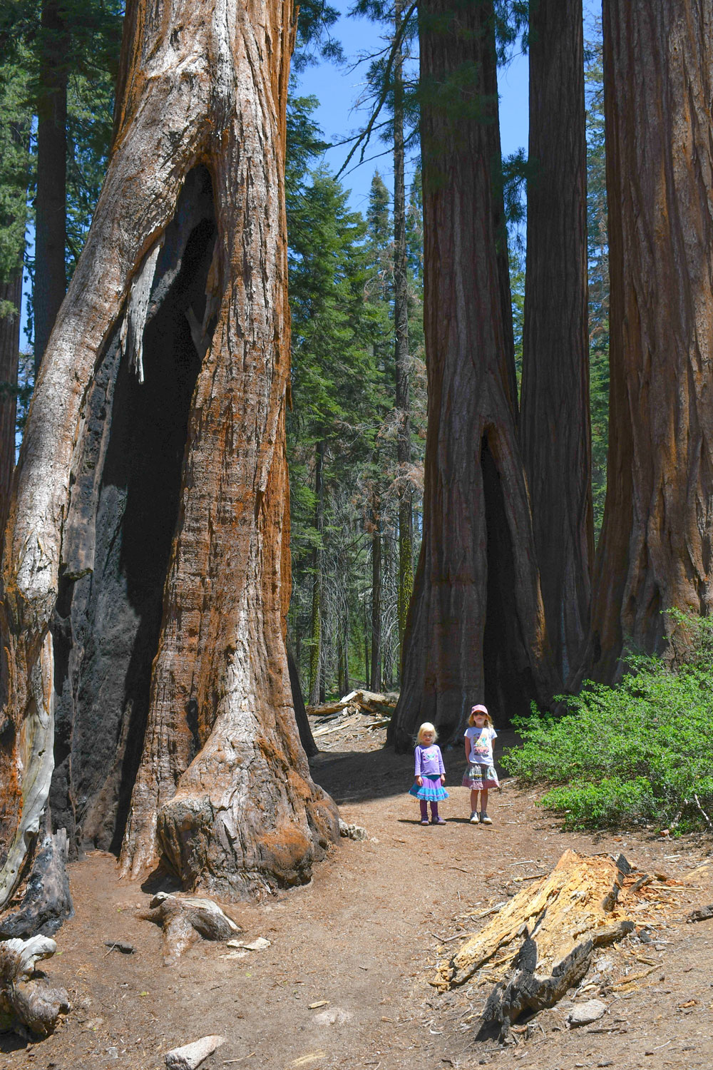 California family adventure road trip Redwoods Hike