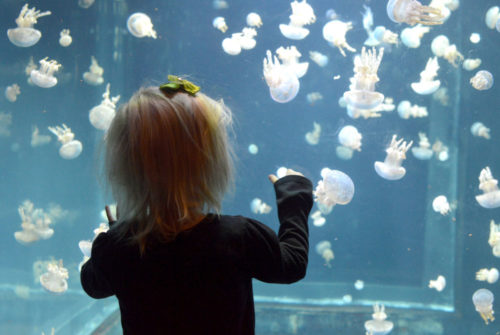 Vancouver Aquarium jellyfish display - Mommy Scene