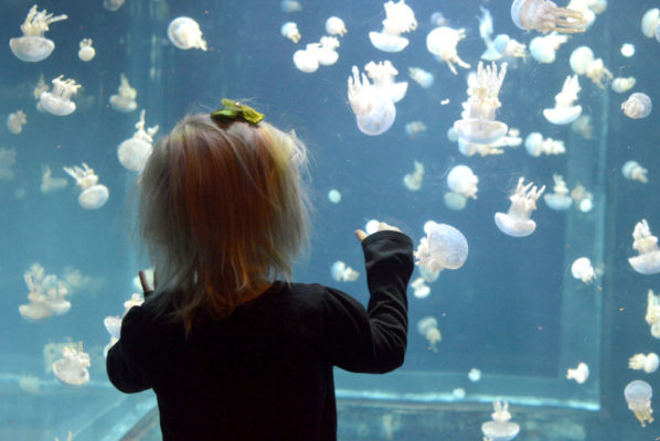 Vancouver Aquarium Family Trip Destination