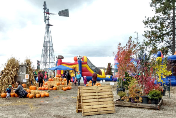 Family Fun at New Leaf Nursery Fall Festival
