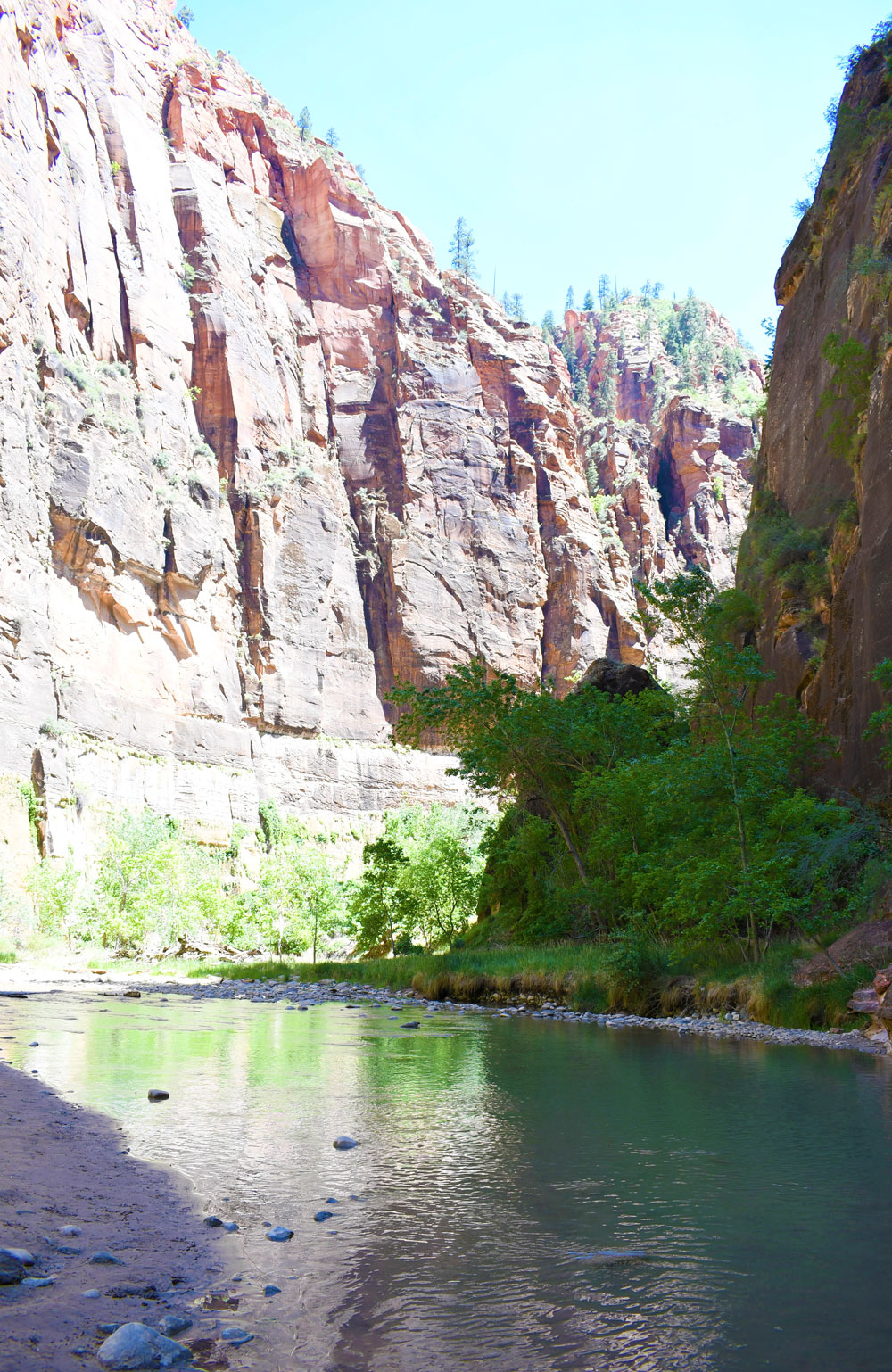 Red canyon walls and bright green trees at Zion Canyon