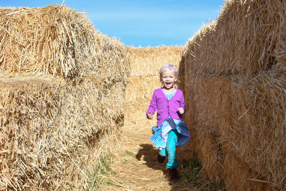 Green Bluff Becks Harvest House Corn Maze - Things To Do at Your Local Pumpkin Farm