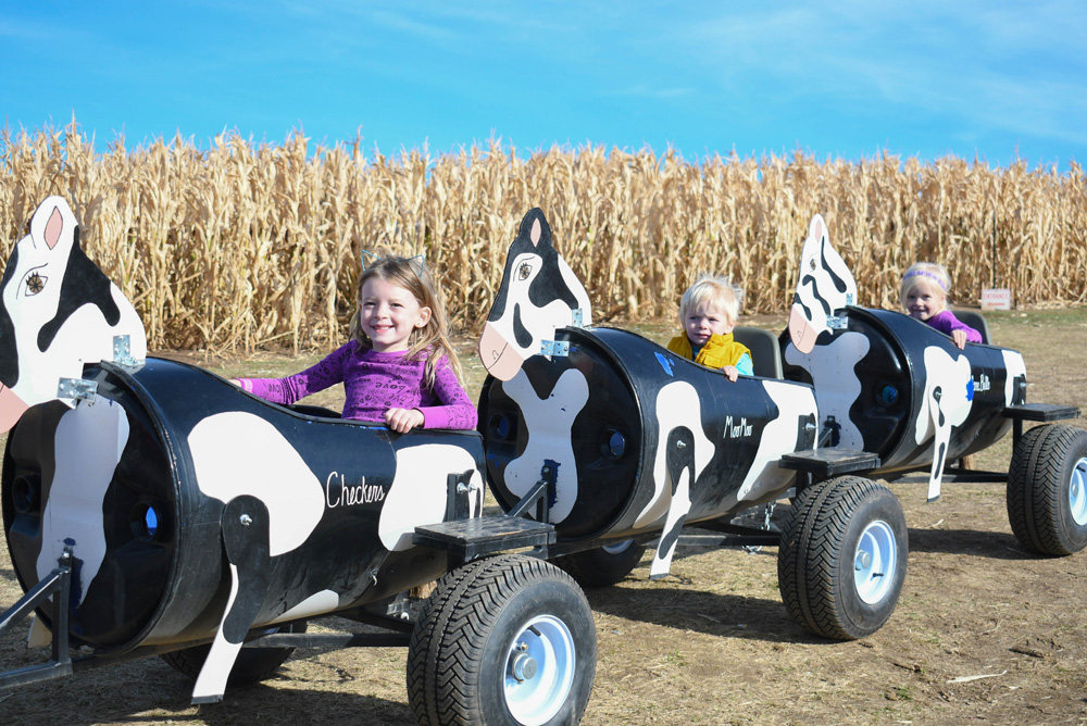 Cow Train Ride - Things To Do at Your Local Pumpkin Farm