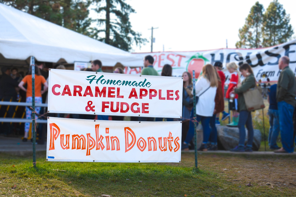 Green Bluff Becks Harvest House Pumpkin Doughnuts - Things To Do at Your Local Pumpkin Farm