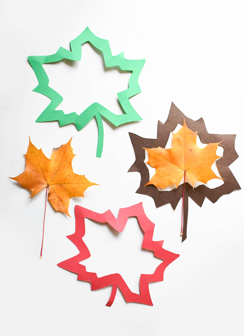 Colorful tissue paper leaf sun catchers kids craft