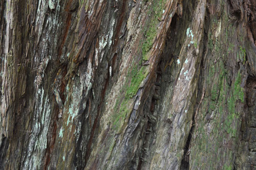 royalty free tree bark stock photo texture