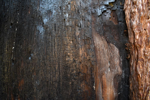 royalty free burned tree bark stock photo, charred