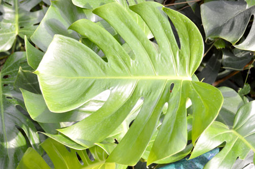 royalty free tropical leaf stock photo