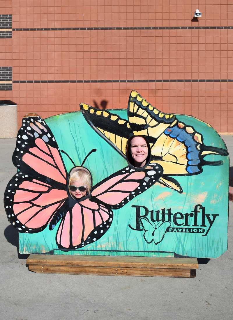 Fun family exhibits at the Denver Butterfly Pavilion