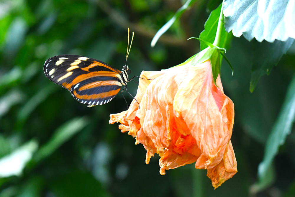 Visit the Butterfly Pavilion - Things to Do in Denver with Kids