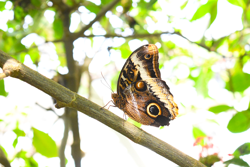 Denver Butterfly Pavilion educational family visit
