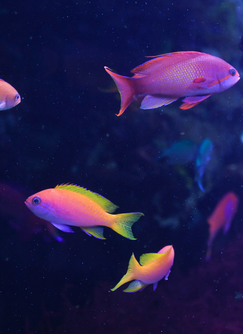 Colorful fish at the Downtown Aquarium - Things to do with kids in Denver