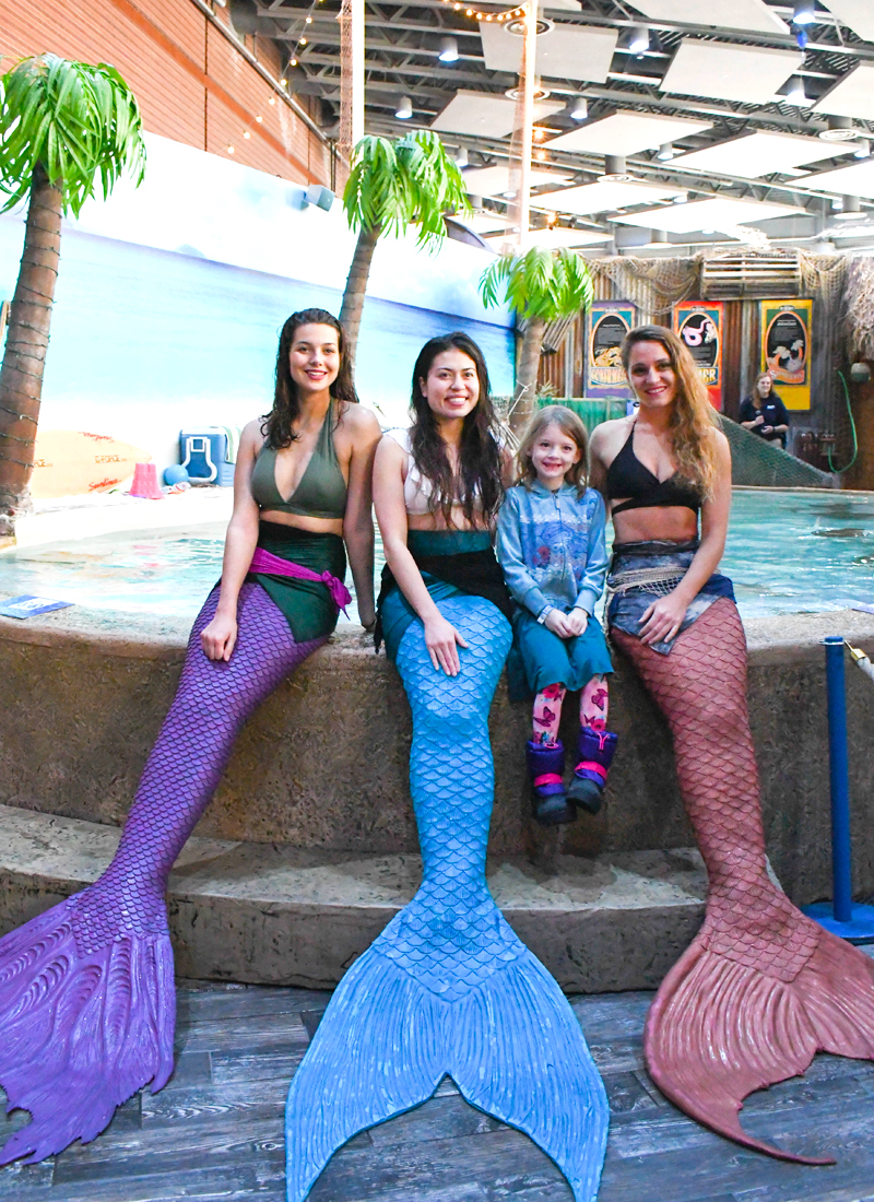 Watch the Mystic Mermaids at the Denver Aquarium