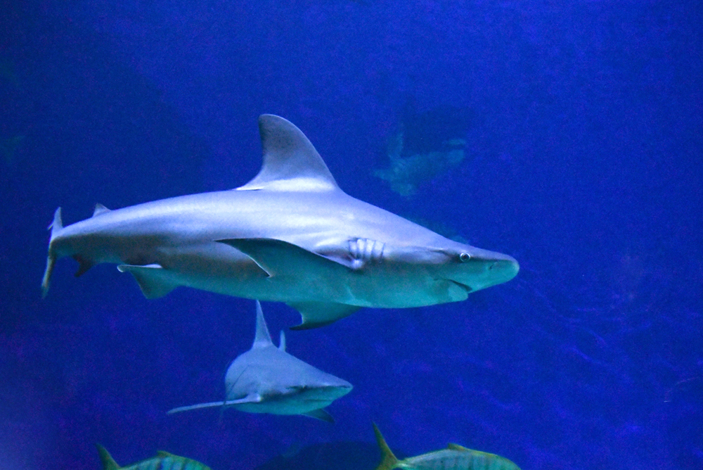 See the sharks at the Denver Aquarium
