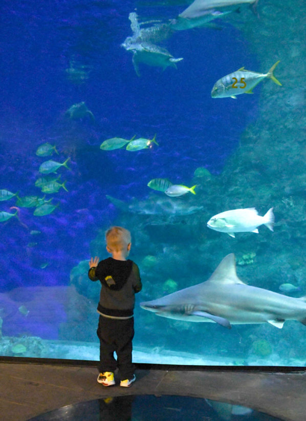 Things to Do in Denver with Kids: Downtown Aquarium