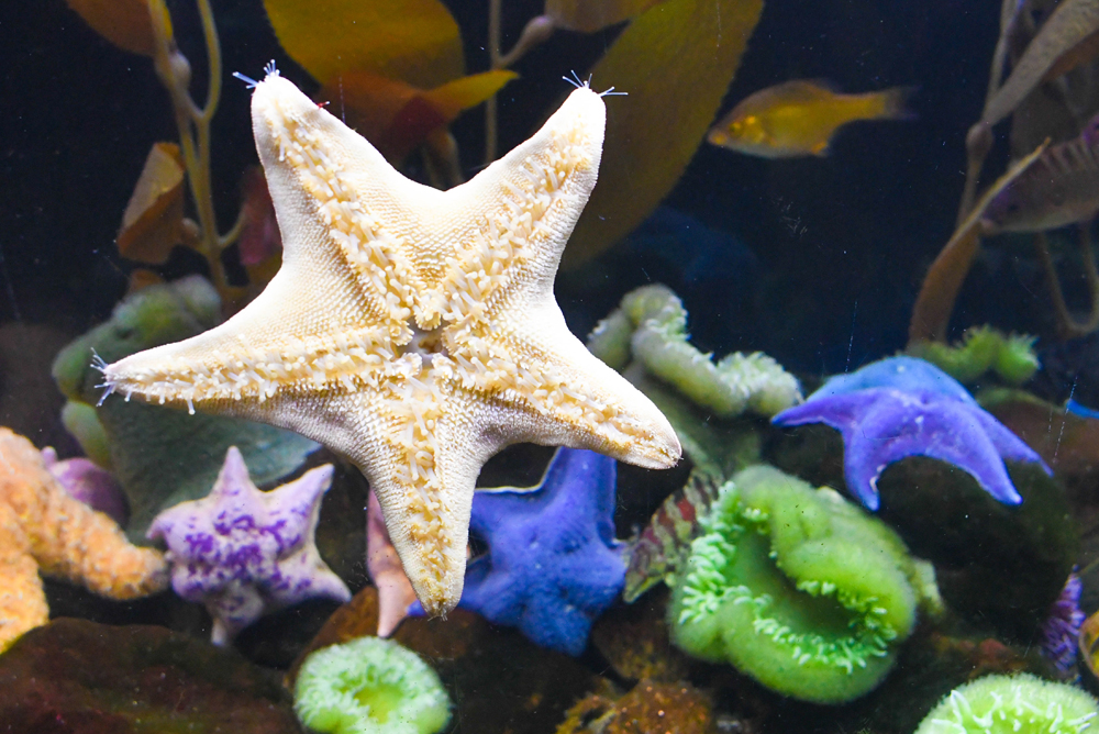 See a wide variety of sea creatures at the Denver Aquarium - Things to do with kids in Denver