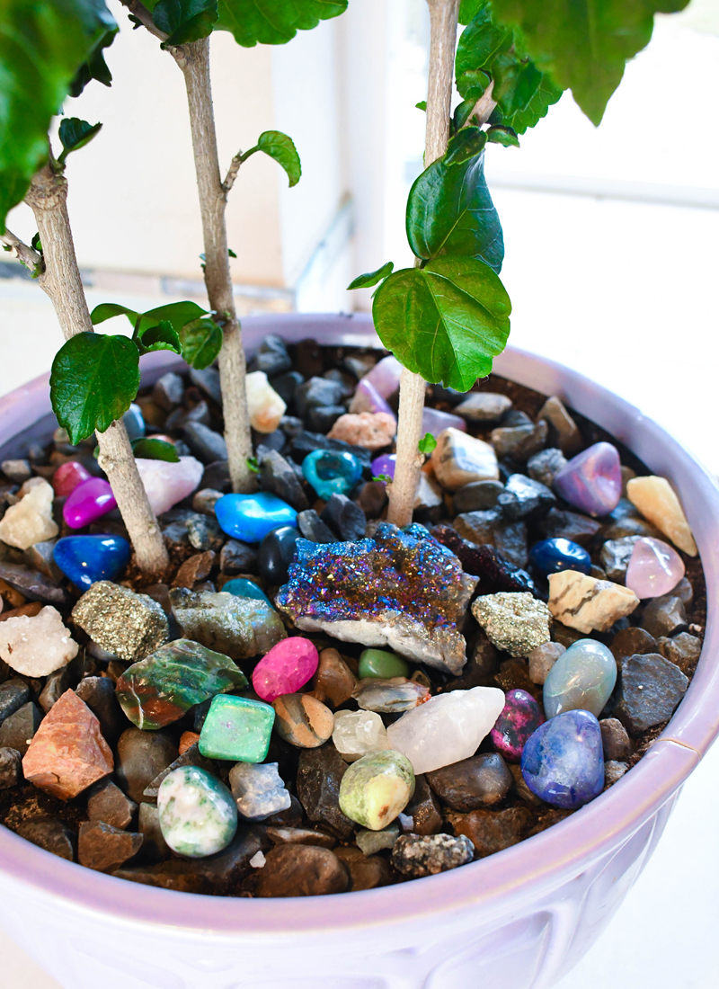 Refresh an Indoor Plant with Colored Rocks