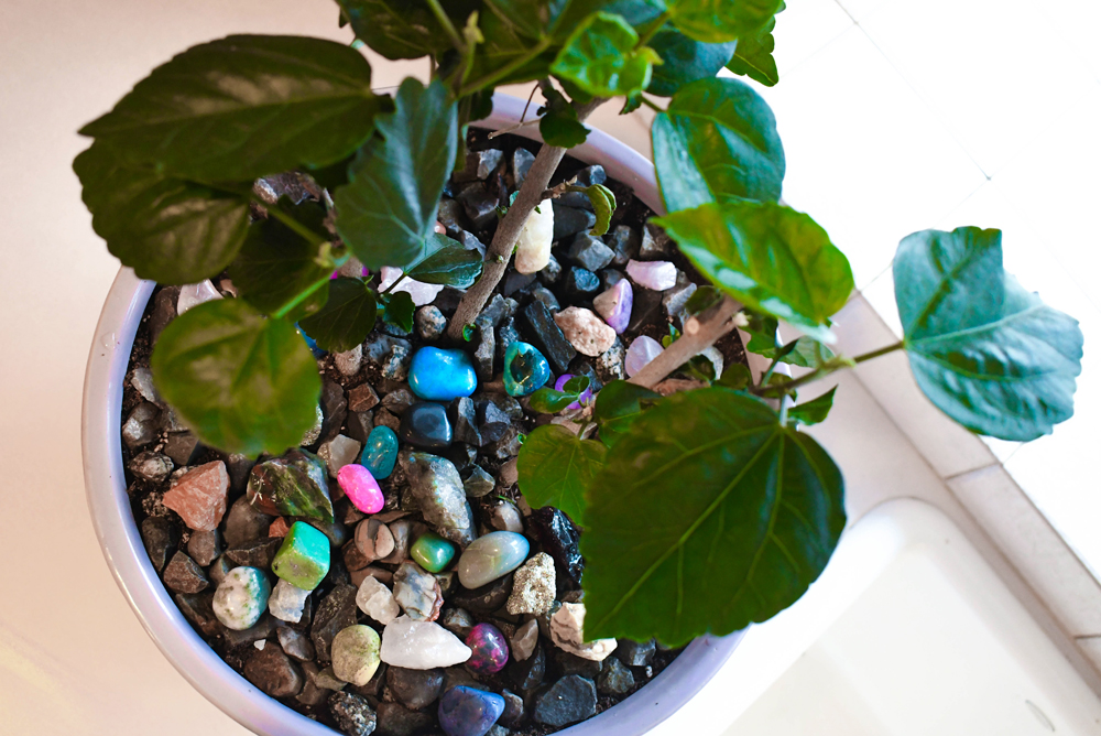 this decorative potted plant project is a great way to display your rock collection
