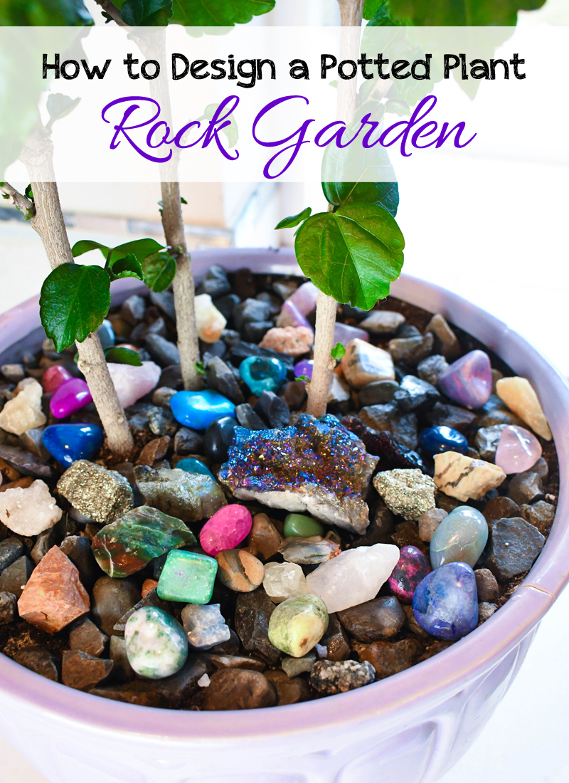 How to create a colorful indoor plant rock garden