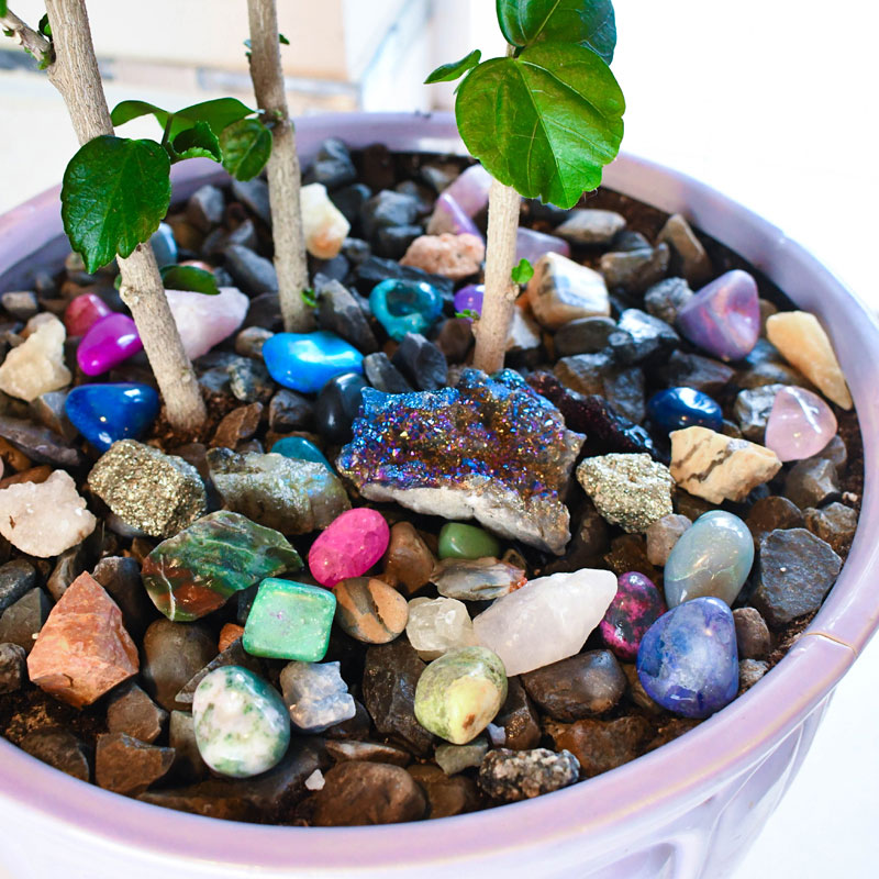 How to Arrange Indoor Plants with Colored Rocks decorating idea