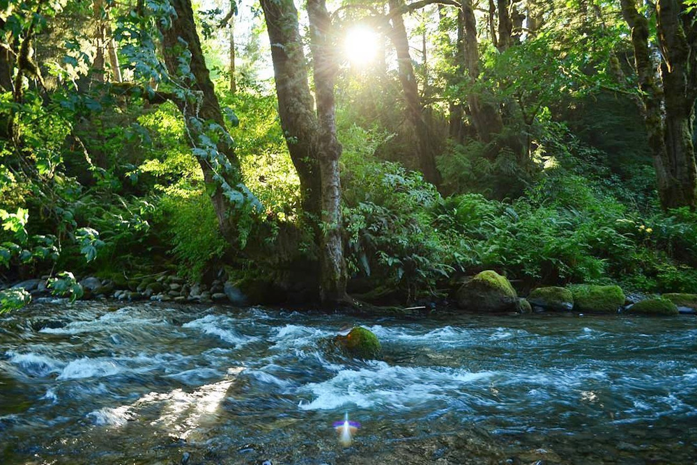 Lyre River Campground Olympic Peninsula - Pacific Northwest Family Vacation Destinations