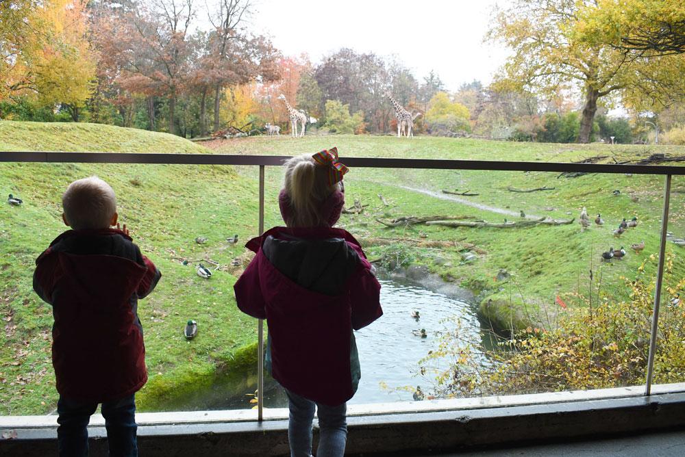 Seattle Woodland Park Zoo giraffe exhibit