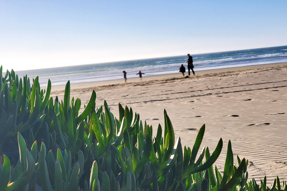 Walk Down to the Local Beach at Pismo